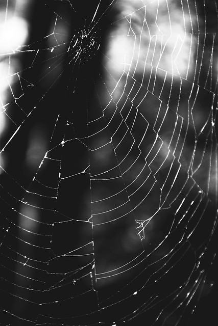 ... the width of a thread from a spider's web