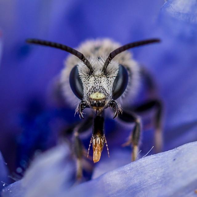 Creepy bee