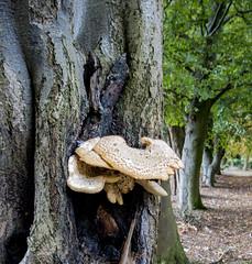 Fungi on tree.