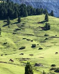 20190728 Parc Natural del Cadí-Moixeró