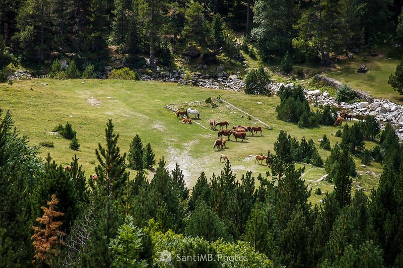 Unos caballos junto al Noguera de Tor desde el mirador de la Presa de Cavallers
