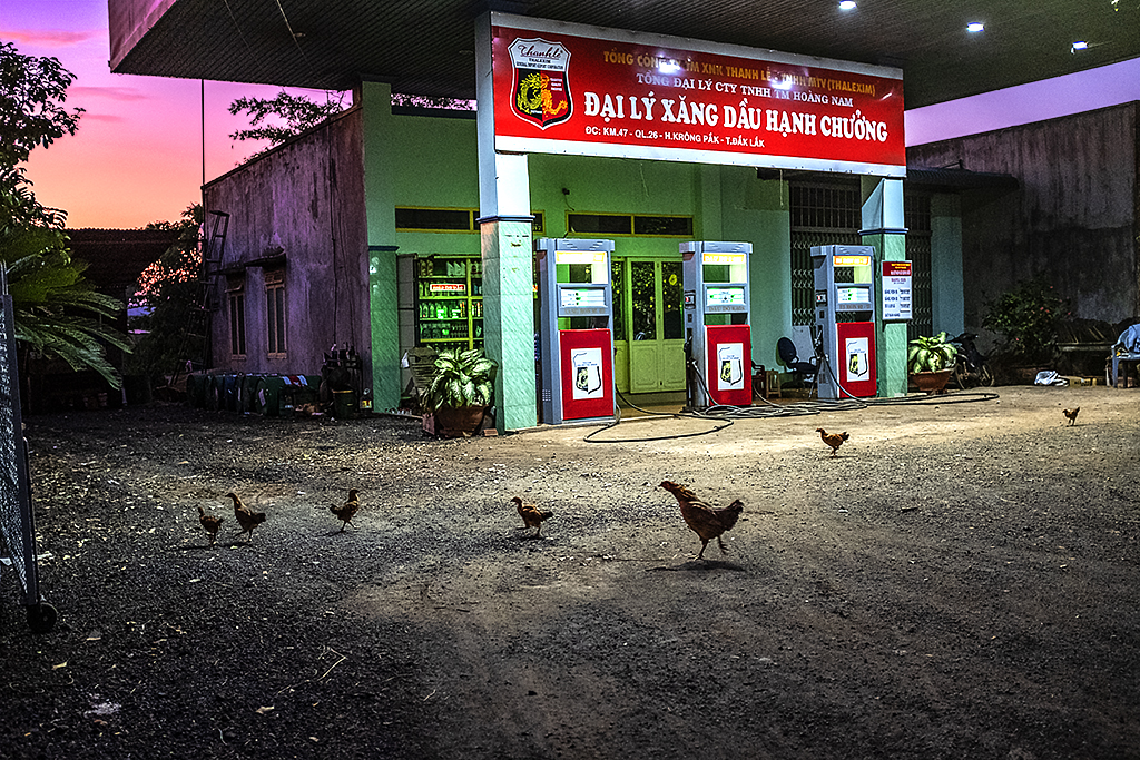 Chickens at gas station--Ea Kly