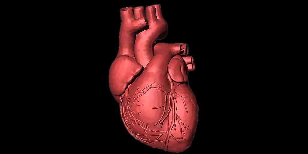 impression-3D-coeur