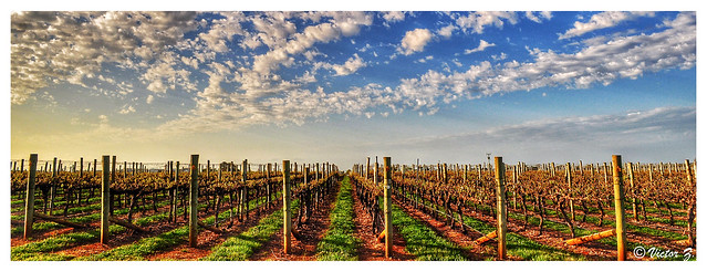 Barossa Valley vineyard South Australia -35