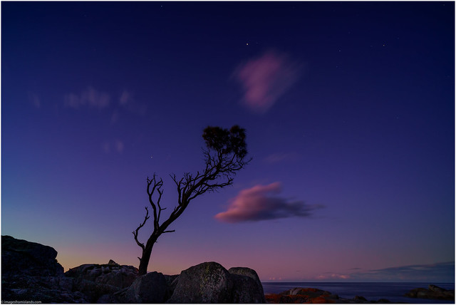 Tree at the edge of Night