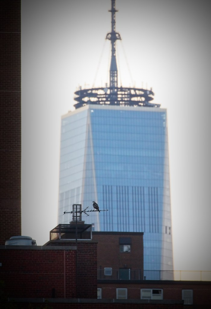Red-tail and 1 World Trade