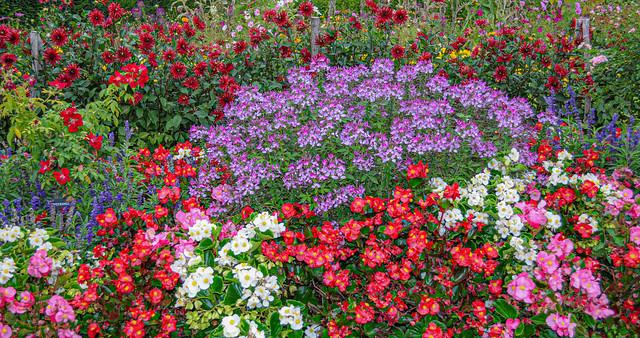 Foison de fleurs