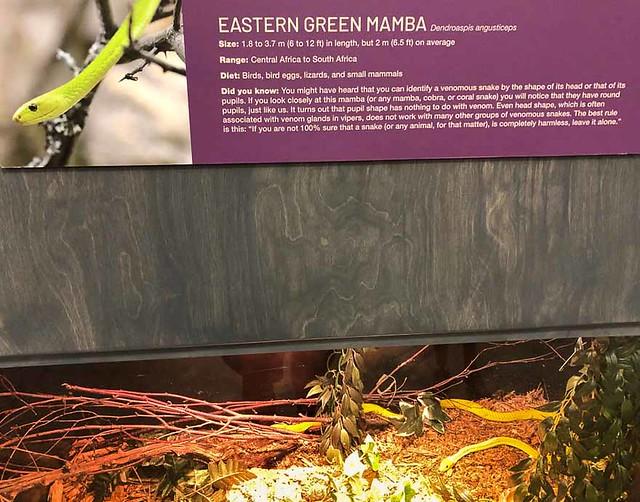 E Green Mamba 0045