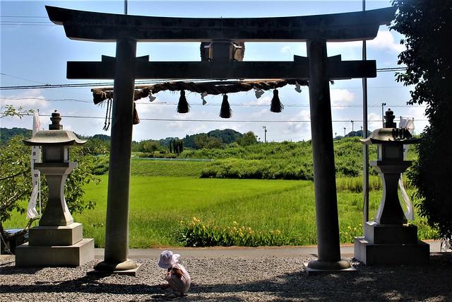 kotonomama-gosyuin027