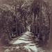 Lightkeeper's Walk