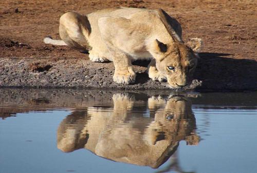 Botswana 5