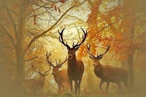 Autumnal Equinox (Mabon)