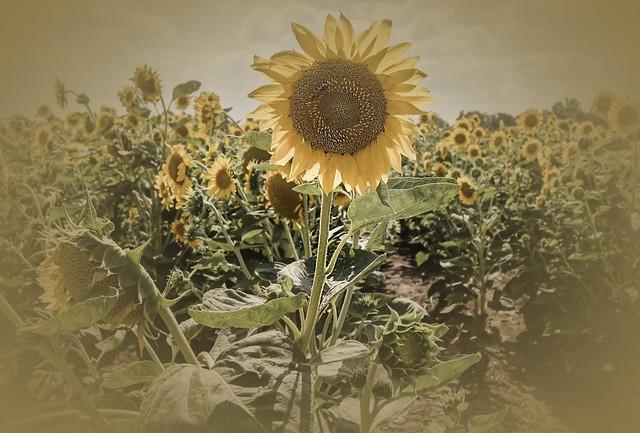 Midsummer (Litha)