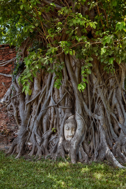 Ayutthaya – Buddha head in Banyan tree