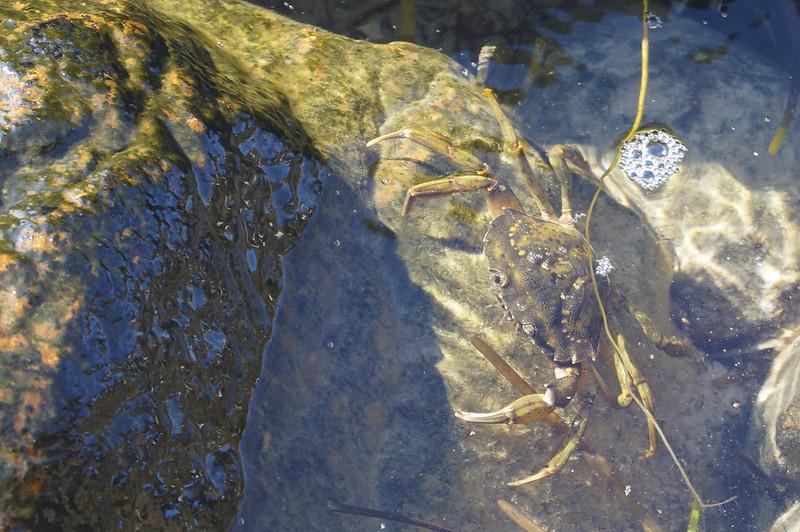 Krabbesten