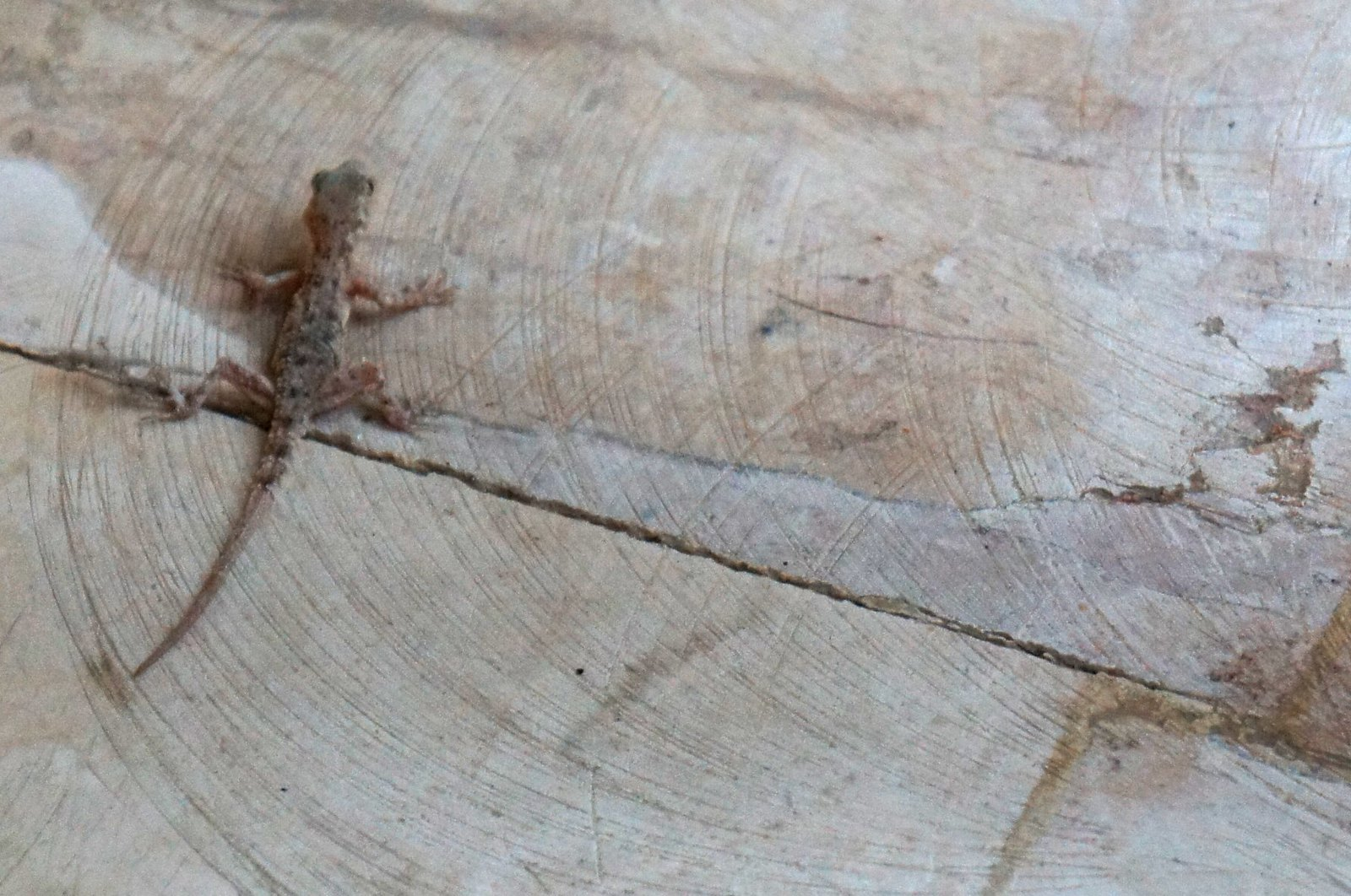 ... and a little lizard : )