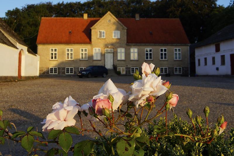 Roser-foran-gaardsplads