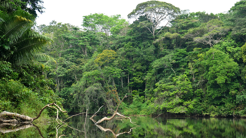 Dense jungle flanks the banks of the Palumeu river