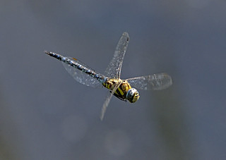 Migrant Hawker 1 10 Sept 19