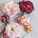 Still Life Spent Roses