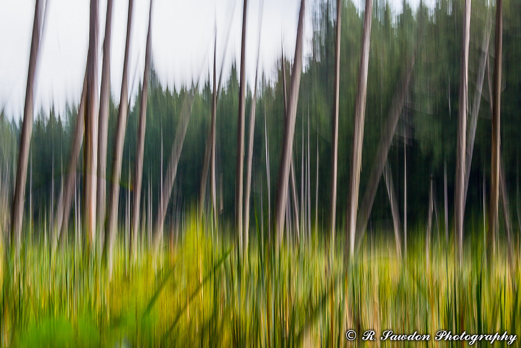 Cattails and Trees