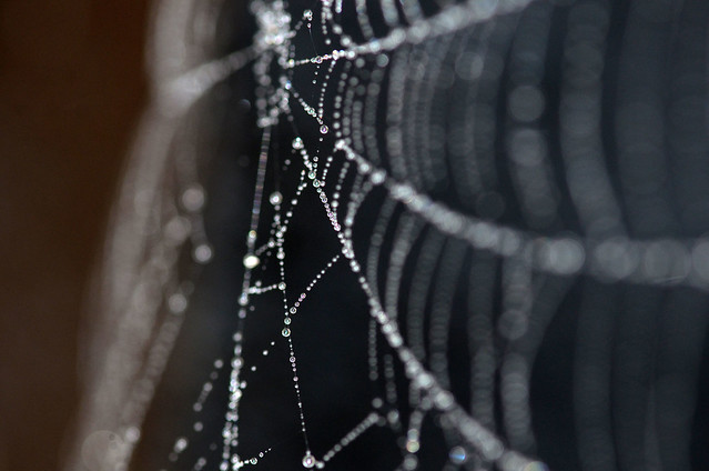 Web with Dew (Explored)