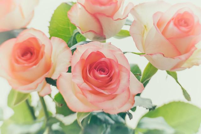 Fünf Rosen