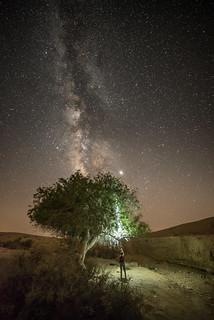 Lighting up a tree