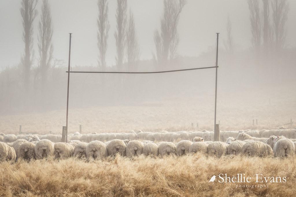 Rugby Scrum- St Bathans Domain, Central Otago