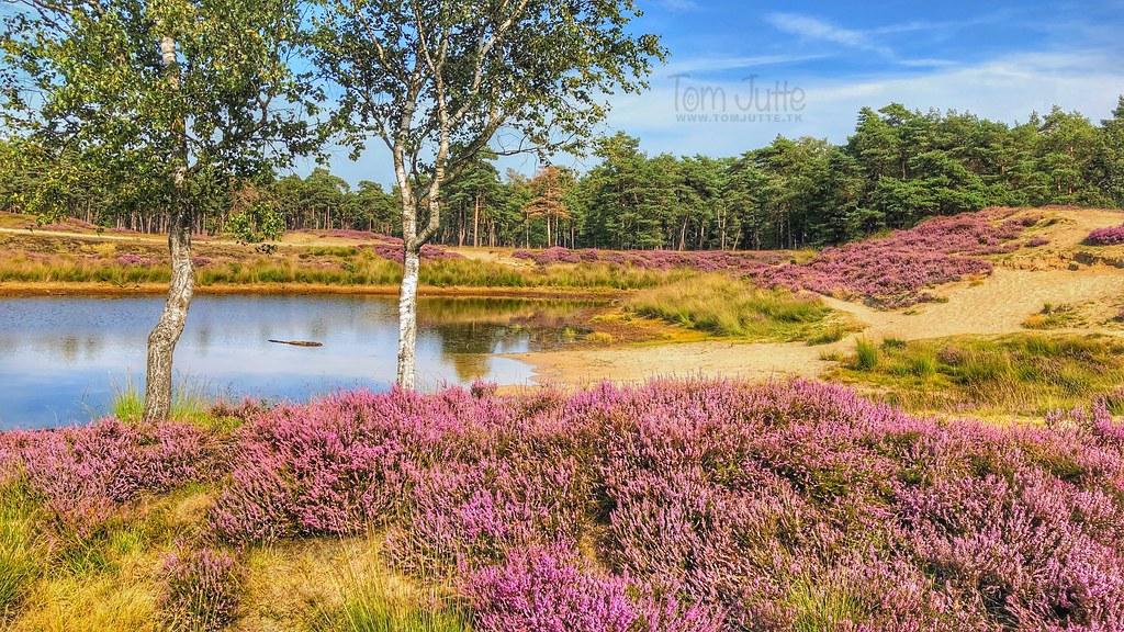 Small lake on the historic Heidestein estate, Zeist, Netherlands - 2993