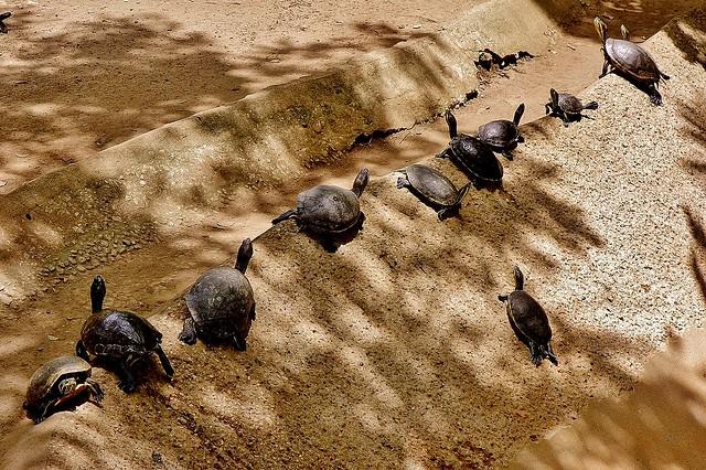 MEXICO,  Tabasco, Villahermosa- Parque-Museo de la Vento,  Fauna und Flora, Schildkröten,  19262/11937