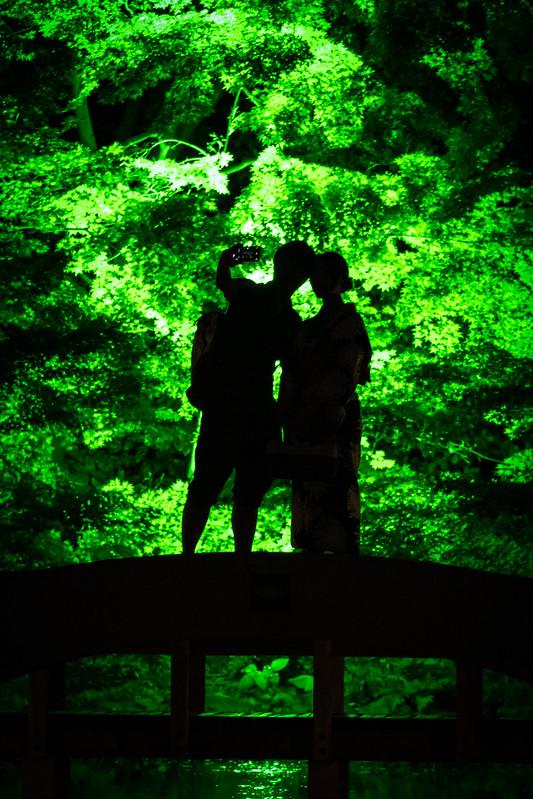 徳川園の夏のライトアップ「徳川園夕涼み」で夏の夜の思い出を撮るの画像