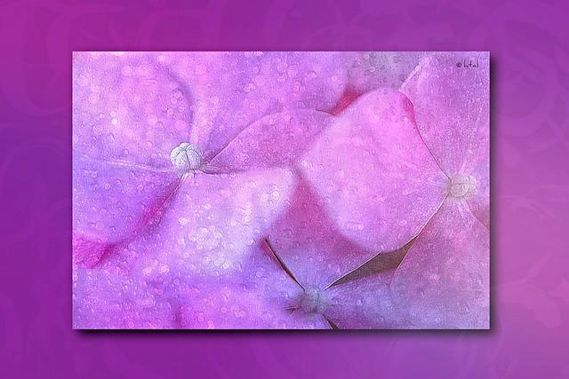 Artistic Hydrangea