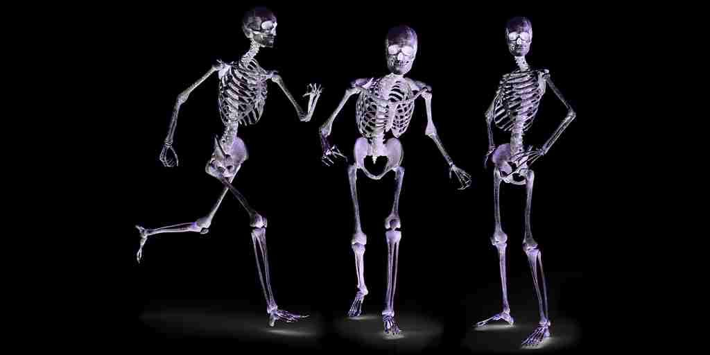 les-os-libèrent-une-hormone-pour-faire-face-à-un-danger-soudain