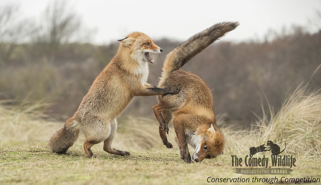 Comedy Wildlife Photography Awards - 2019 Finalist