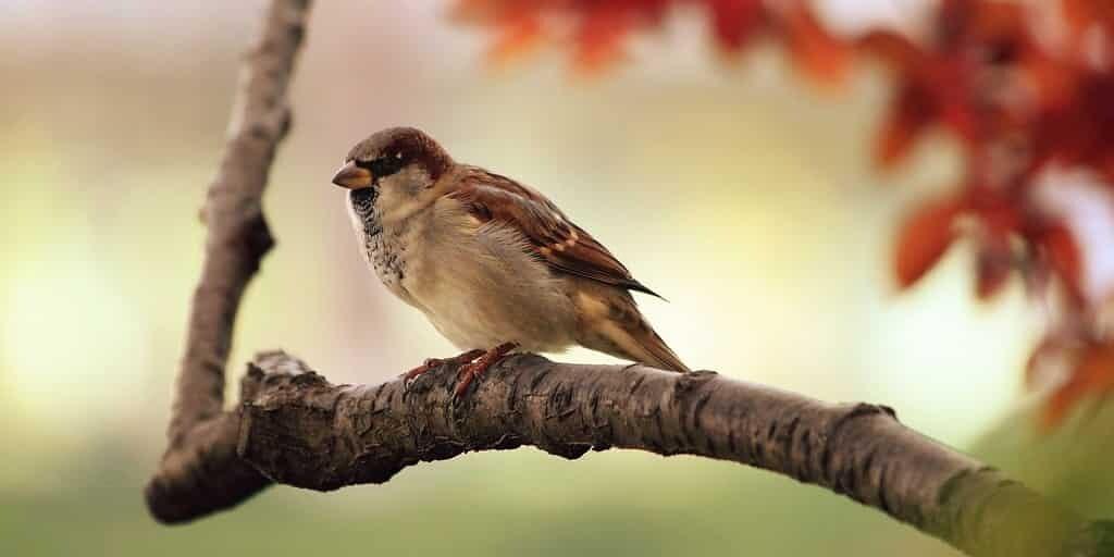 un-pesticide-rend-les-oiseaux-anorexiques