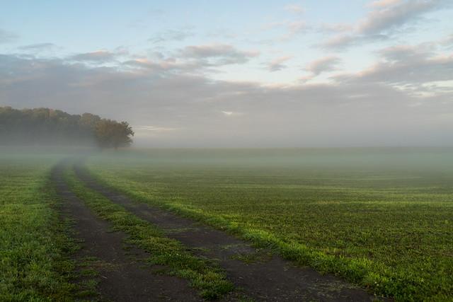 Brume matinale sur l'Île d'Orléans