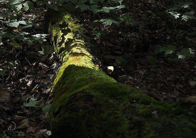 La forêt enchantée/The enchanted forest