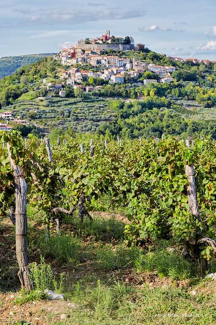 Motovun i vinogradi