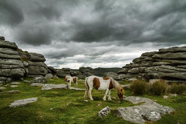 Pew Tor Ponies