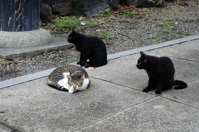 Today's Cat@2019-09-13
