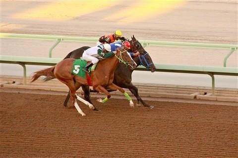 5341 Horse Racing Gearing Up For World's Richest Race In Saudi Arabia