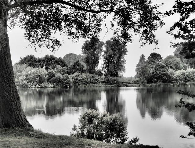 The Quiet Corner. Gunwade Lake. 9/09/2019.