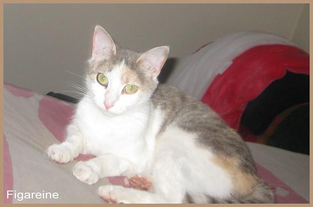 Je vous présente Chipie , la petite chatte de la famille d'accueil d'Isa