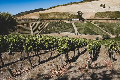 The vineyards of Douro