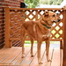 Orange Porch, Orange Dog