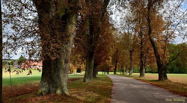 Herbstliche Allee zum Hofgut