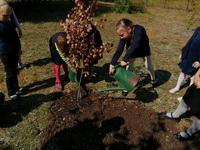 "Акция ""Посади свое дерево"""