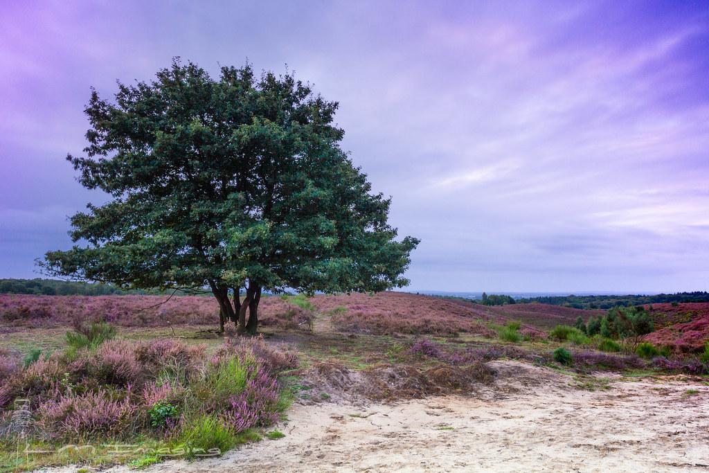 National Park Veluwezoom <NL>. Sunrise.