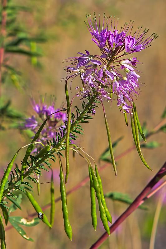 Wild-Flower-13-7D1-091019